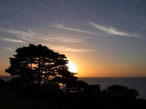 Sunset behind pine by eccles