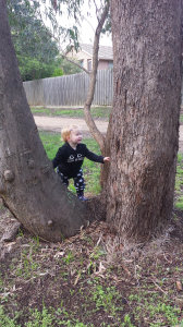 tree.jpg by lydia