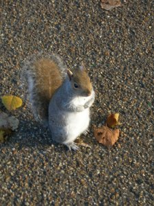 squirrel03.jpg by orca