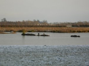Birds at the wetlands by orca