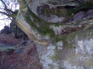 Tree wedged in rocks by orca
