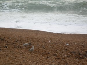 beach01.jpg by orca