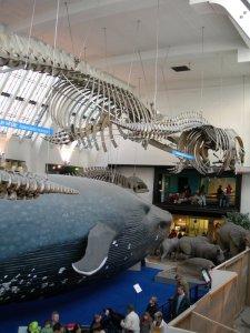 blue_whale02.jpg by orca