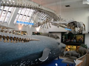 blue_whale.jpg by orca