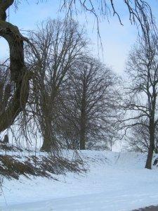 snowytrees.jpg by orca