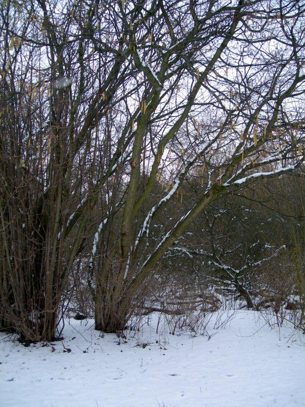 trees4.jpg by orca
