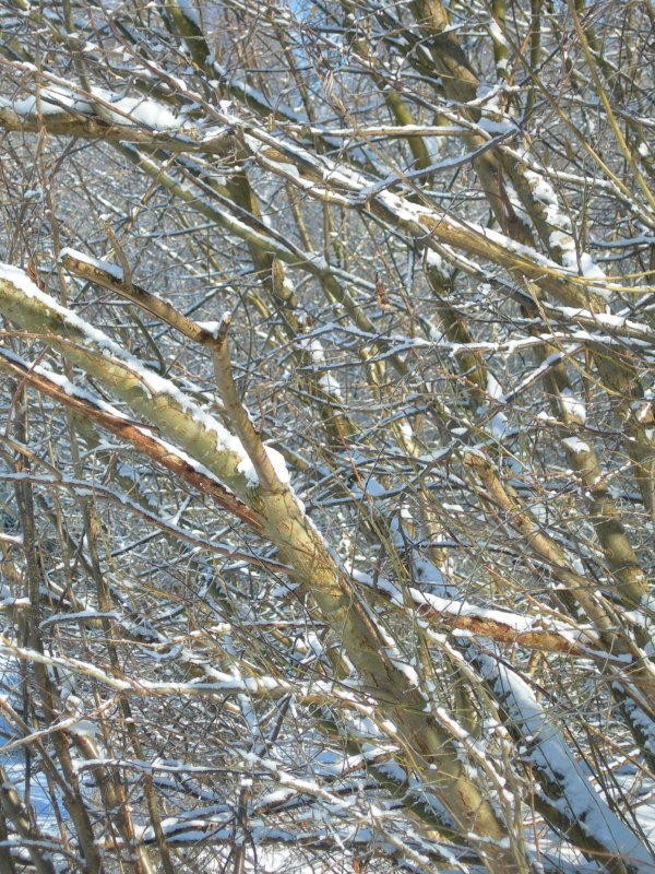 branches1.jpg by orca