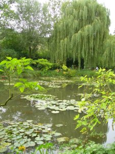 pond_and_willow01.jpg by orca
